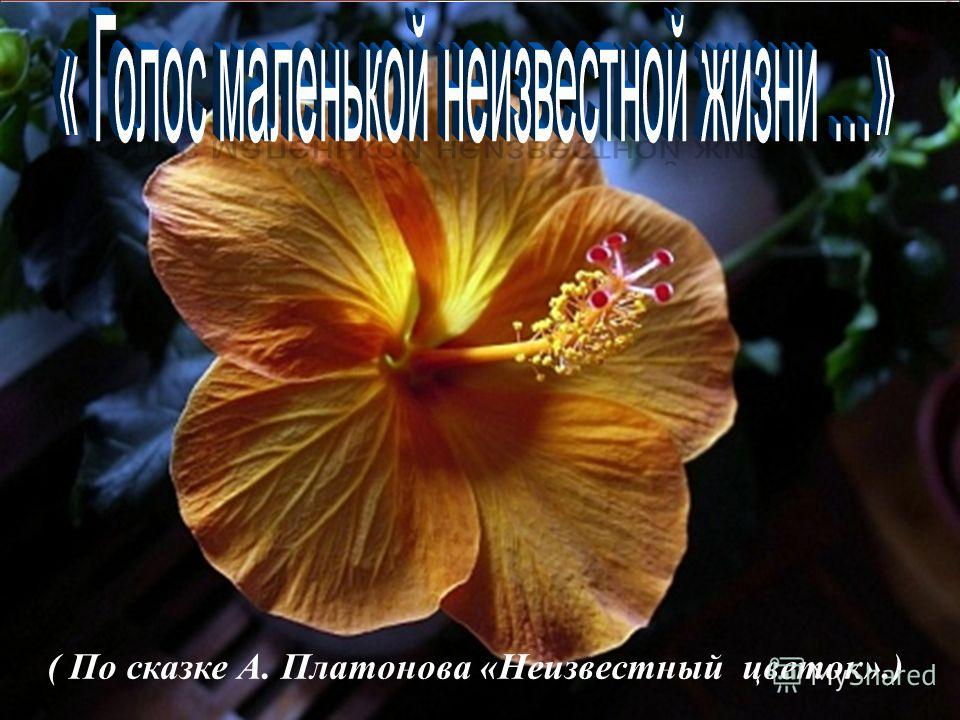 ( По сказке А. Платонова «Неизвестный цветок».)