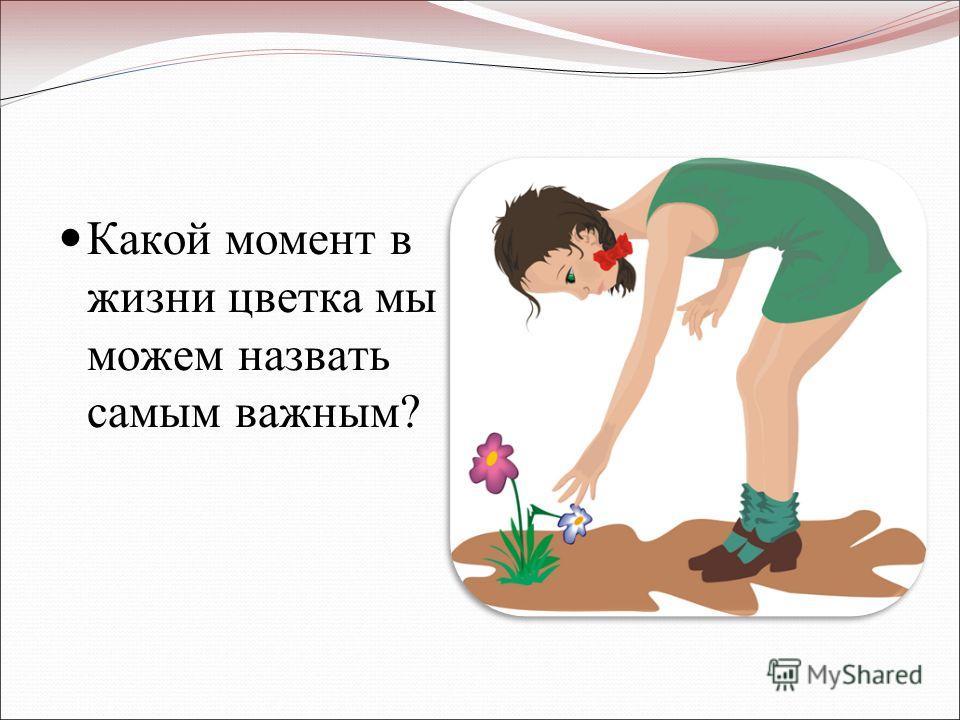 Какой момент в жизни цветка мы можем назвать самым важным?