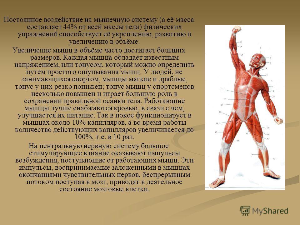 Постоянное воздействие на мышечную систему (а её масса составляет 44% от всей массы тела) физических упражнений способствует её укреплению, развитию и увеличению в объёме. Увеличение мышц в объёме часто достигает больших размеров. Каждая мышца облада