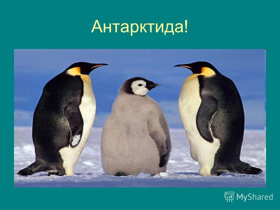 Антарктида!