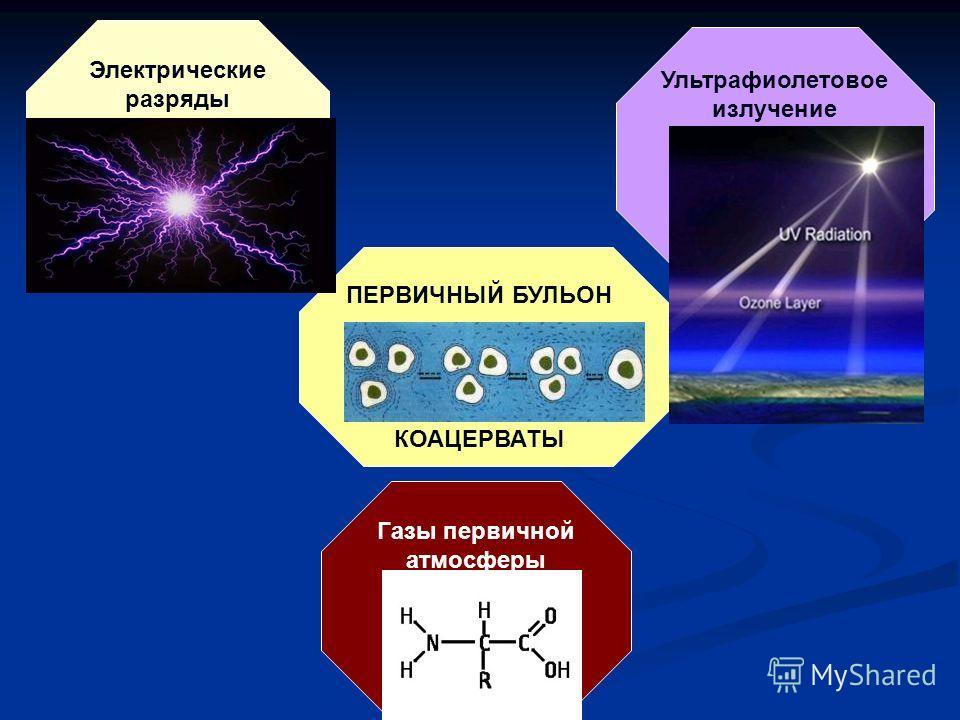 ПЕРВИЧНЫЙ БУЛЬОН КОАЦЕРВАТЫ Электрические разряды Ультрафиолетовое излучение Газы первичной атмосферы