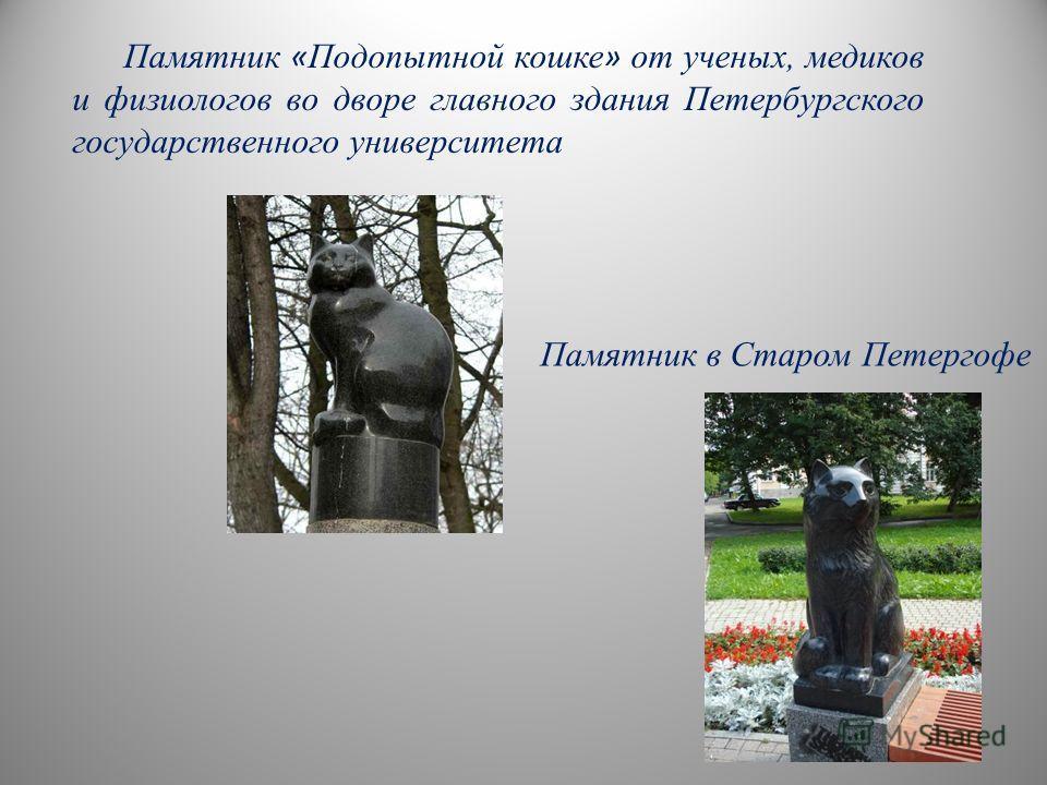 Памятник в Старом Петергофе Памятник « Подопытной кошке » от ученых, медиков и физиологов во дворе главного здания Петербургского государственного университета