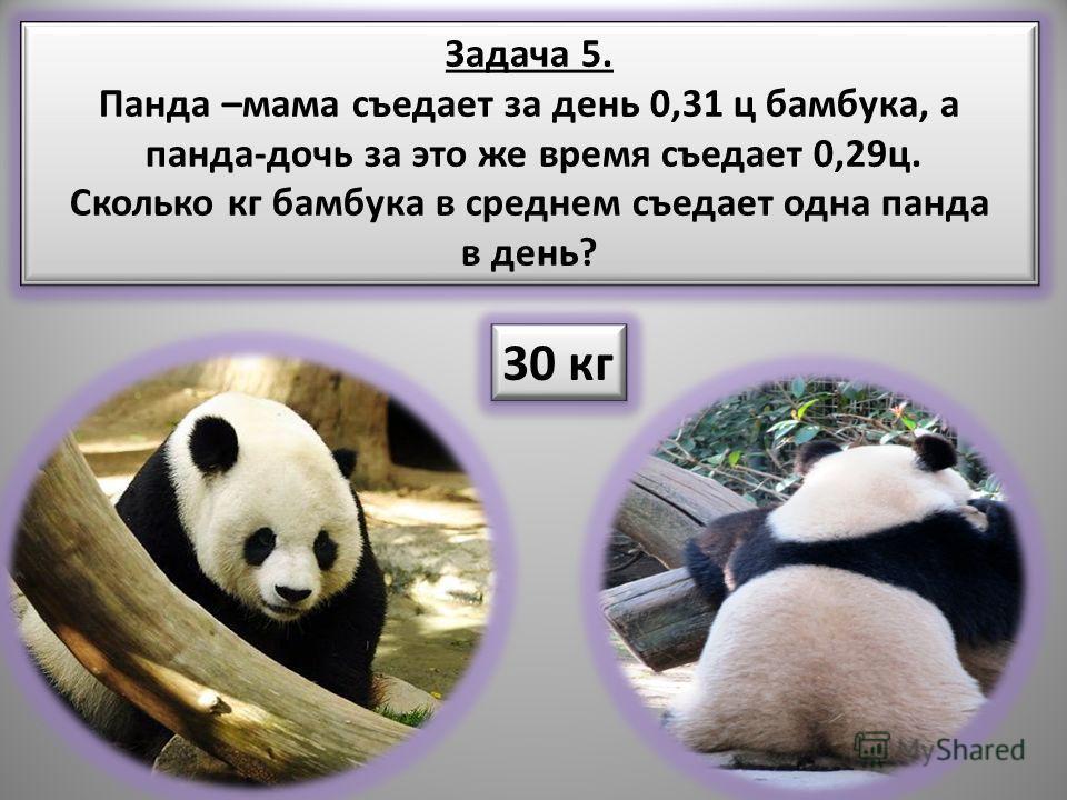 Задача 5. Панда –мама съедает за день 0,31 ц бамбука, а панда-дочь за это же время съедает 0,29ц. Сколько кг бамбука в среднем съедает одна панда в день? Задача 5. Панда –мама съедает за день 0,31 ц бамбука, а панда-дочь за это же время съедает 0,29ц