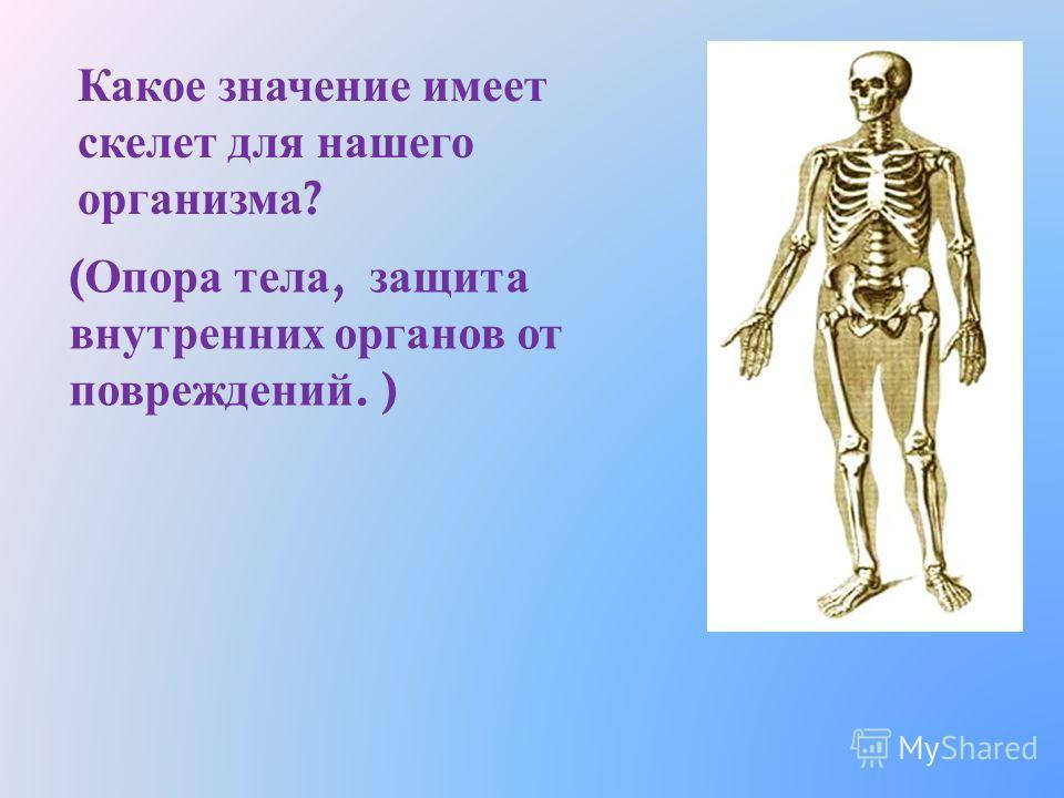 Какую работу выполняет череп ? ( Защита головного мозга ). Скелет туловища – грудная клетка и позвоночник. Как вы, думаете, какова их работа ? ( Защита внутренних органов ).