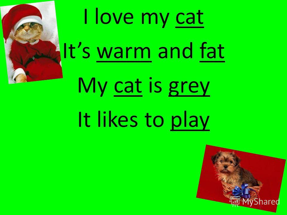I love my cat Its warm and fat My cat is grey It likes to play