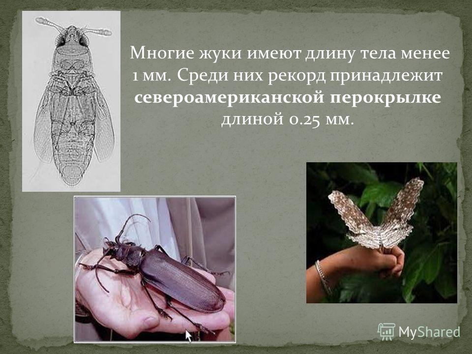 Многие жуки имеют длину тела менее 1 мм. Среди них рекорд принадлежит североамериканской перокрылке длиной 0.25 мм.