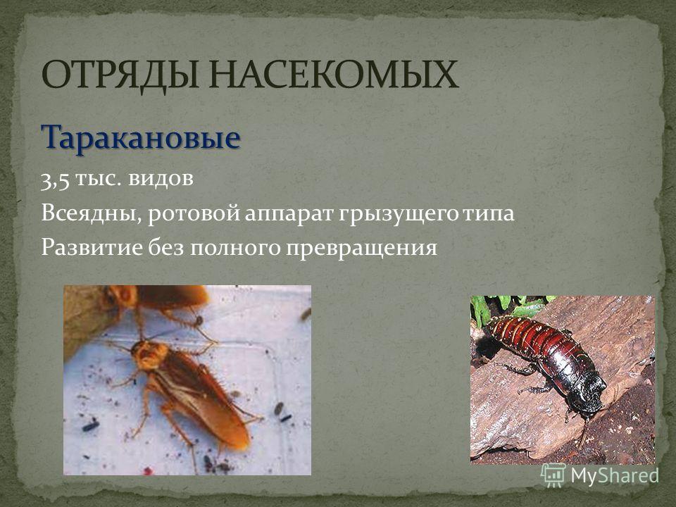 Таракановые 3,5 тыс. видов Всеядны, ротовой аппарат грызущего типа Развитие без полного превращения