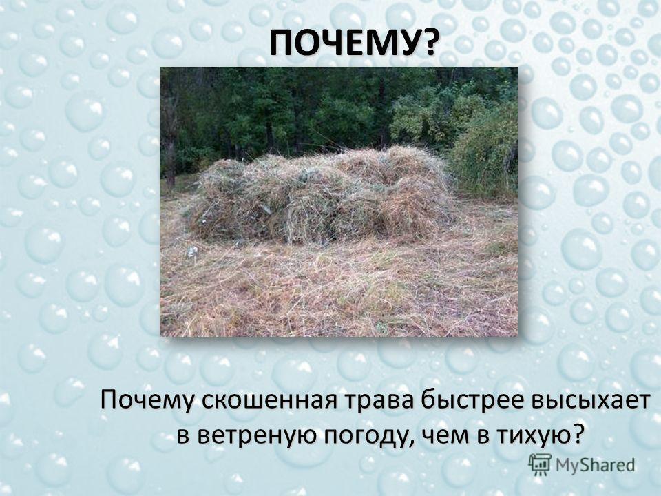 Почему скошенная трава быстрее высыхает в ветреную погоду, чем в тихую? Почему скошенная трава быстрее высыхает в ветреную погоду, чем в тихую?ПОЧЕМУ?