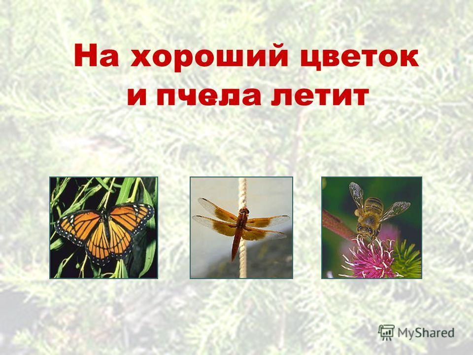 На хороший цветок летити...пчела