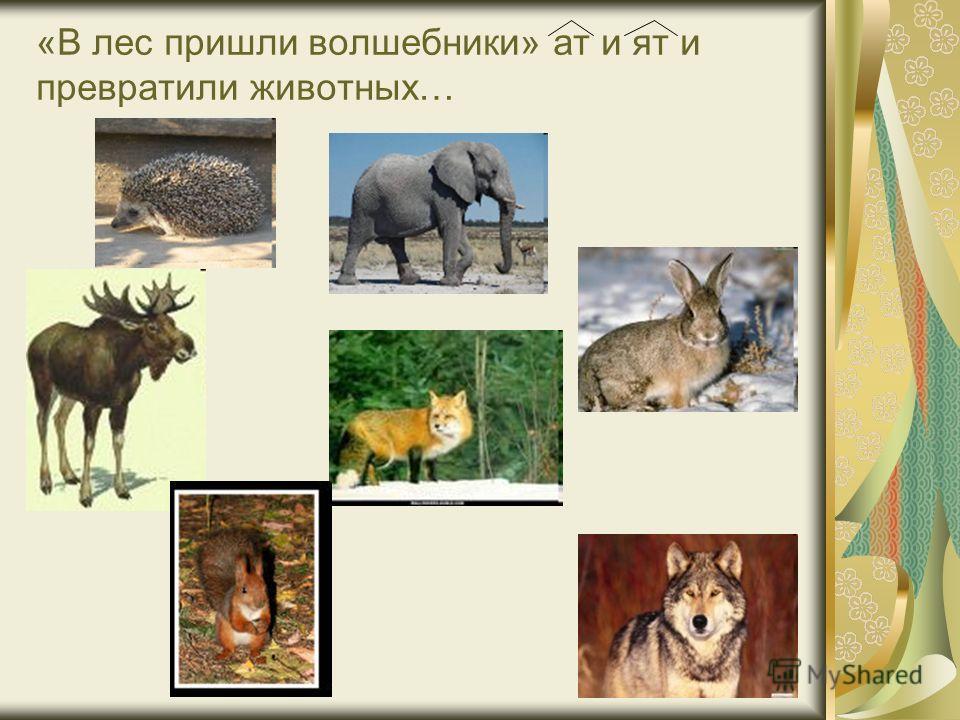 «В лес пришли волшебники» ат и ят и превратили животных…