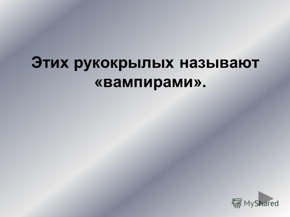 ЧЕСНОЧНИЦА