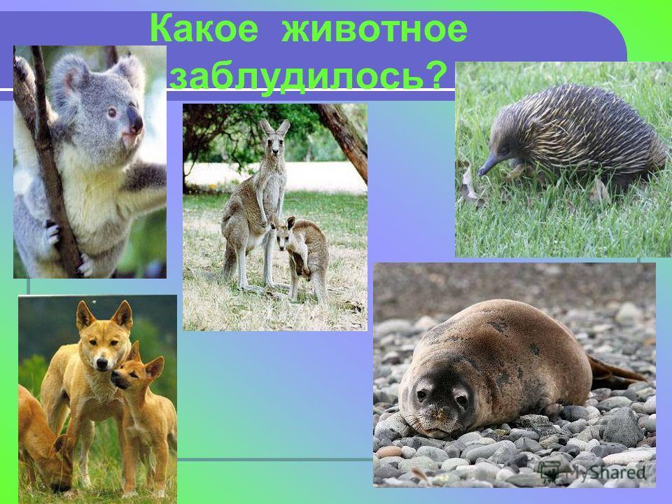 Какое животное заблудилось?
