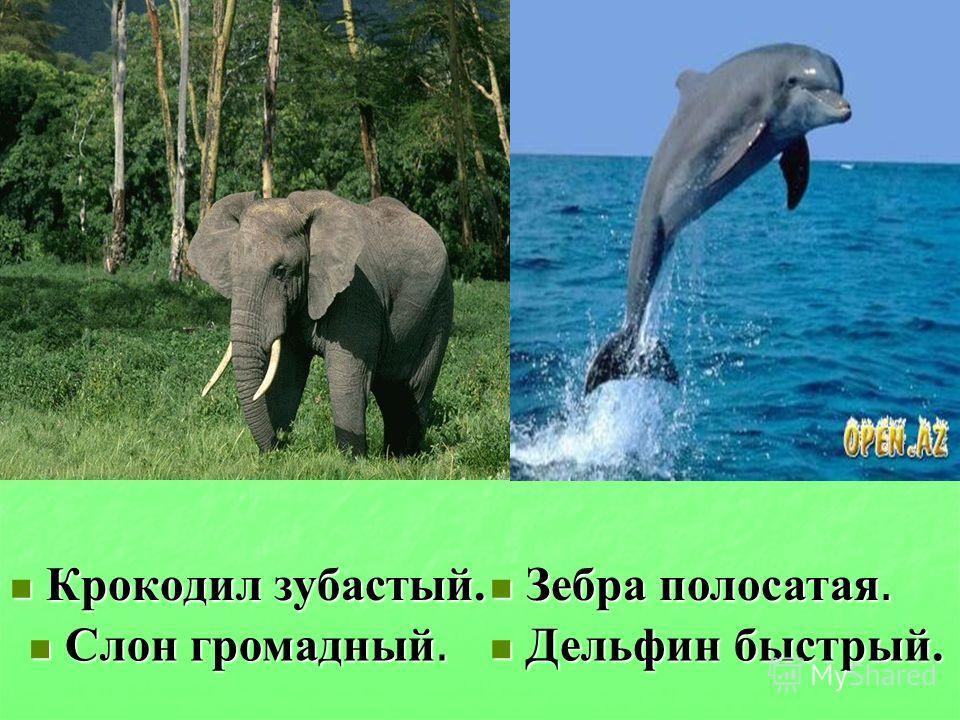 Крокодил зубастый. Зебра полосатая. Слон громадный. Дельфин быстрый.