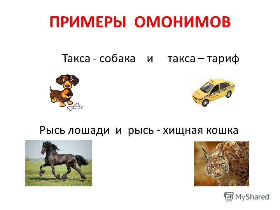 ПРИМЕРЫ ОМОНИМОВ Такса - собака и такса – тариф Рысь лошади и рысь - хищная кошка