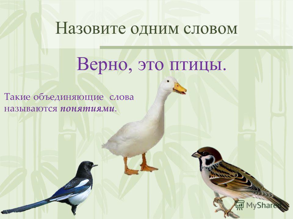 Назовите одним словом Верно, это птицы. Такие объединяющие слова называются понятиями.