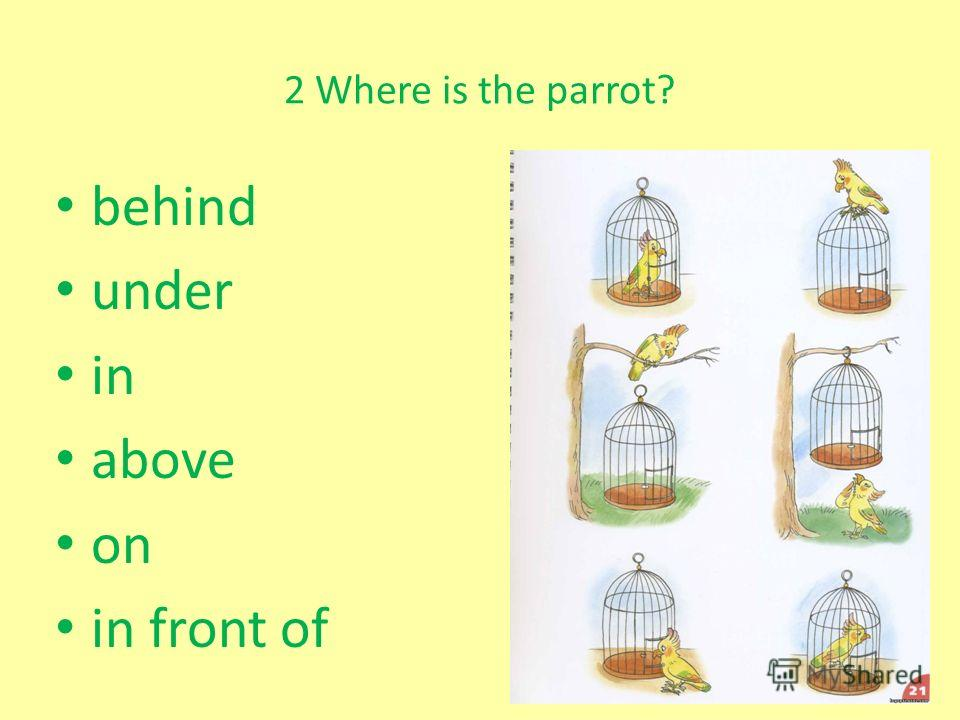 2 Where is the parrot? behind under in above on in front of
