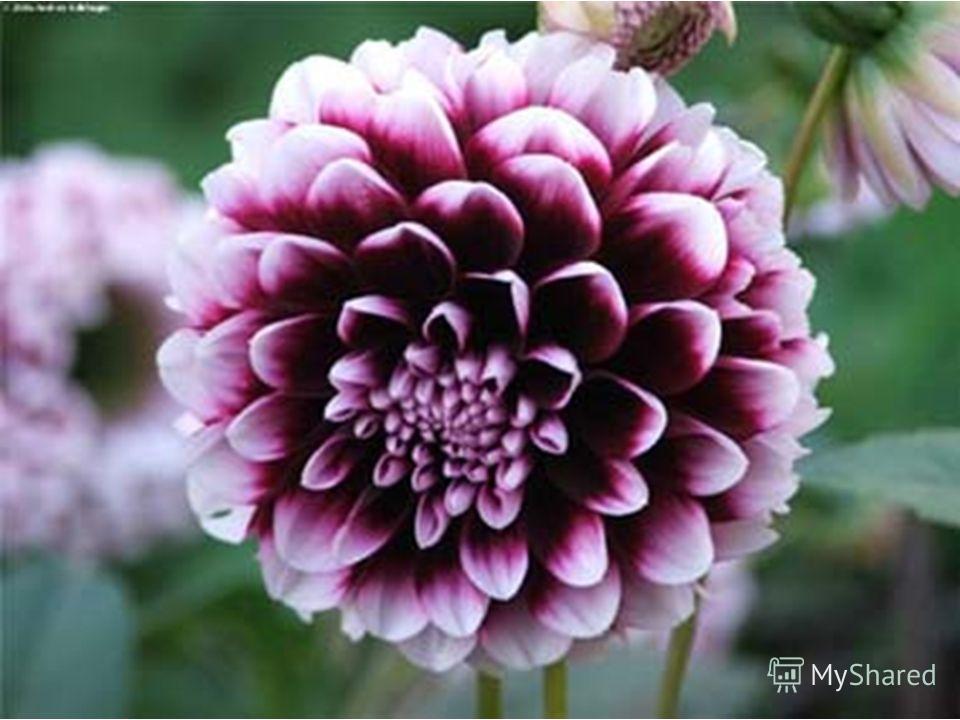 Как прекрасны все цветы А со мной согласен ты? Вся природа дивным цветом Расцвела! Спасибо, лето!