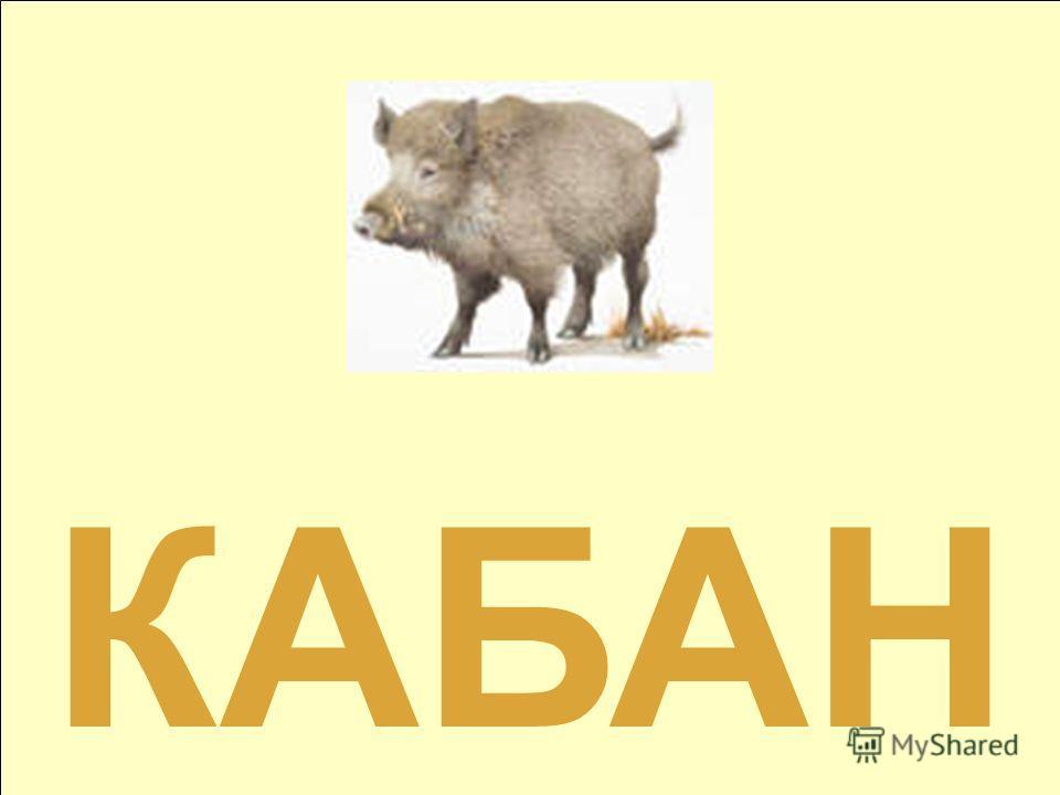 Б А Н К А 3 4 5 1 2 КАБАН