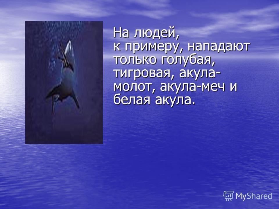 Они могут различать даже самые незначительные изменения химического состава воды. Акулы незамедлительно приближались к тому месту бассейна, где в воду опускали куски рыбы, кальмаров или другой корм.