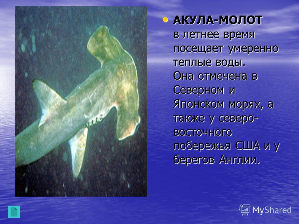 Акула плавает по дну не одна. У нее есть постоянный и вечный спутник- рыба-лоцман. Эта рыба гораздо меньше акул и названа так потому, что она указывает дорогу акуле. Акула плавает по дну не одна. У нее есть постоянный и вечный спутник- рыба-лоцман. Э