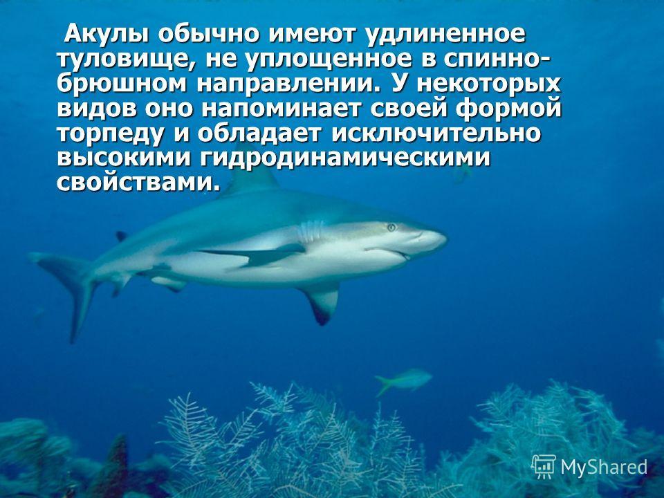 Акула - рыба прожорливая и хищная Если ей нечего есть, то она глотает даже пустые бутылки, консервные банки и всякий хлам.