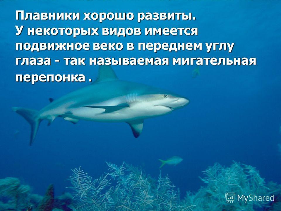 Акулы обычно имеют удлиненное туловище, не уплощенное в спинно- брюшном направлении. У некоторых видов оно напоминает своей формой торпеду и обладает исключительно высокими гидродинамическими свойствами.