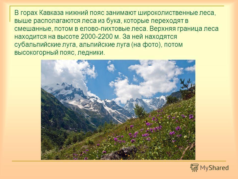 В горах Кавказа нижний пояс занимают широколиственные леса, выше располагаются леса из бука, которые переходят в смешанные, потом в елово-пихтовые леса. Верхняя граница леса находится на высоте 2000-2200 м. За ней находятся субальпийские луга, альпий