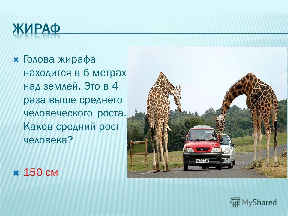 Голова жирафа находится в 6 метрах над землей. Это в 4 раза выше среднего человеческого роста. Каков средний рост человека? 150 см