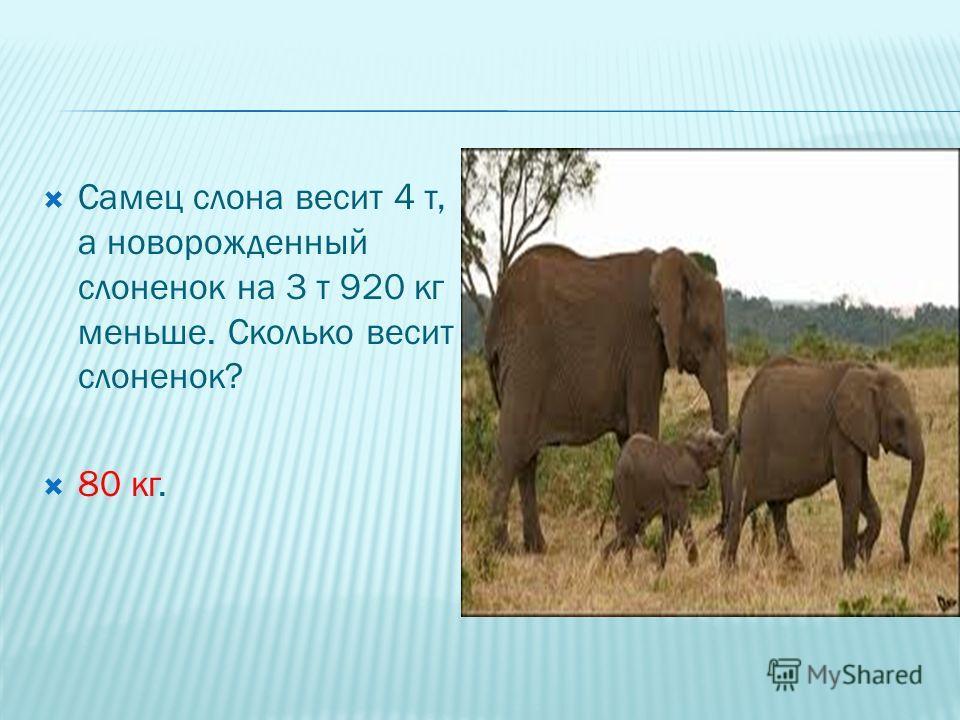 Самец слона весит 4 т, а новорожденный слоненок на 3 т 920 кг меньше. Сколько весит слоненок? 80 кг.