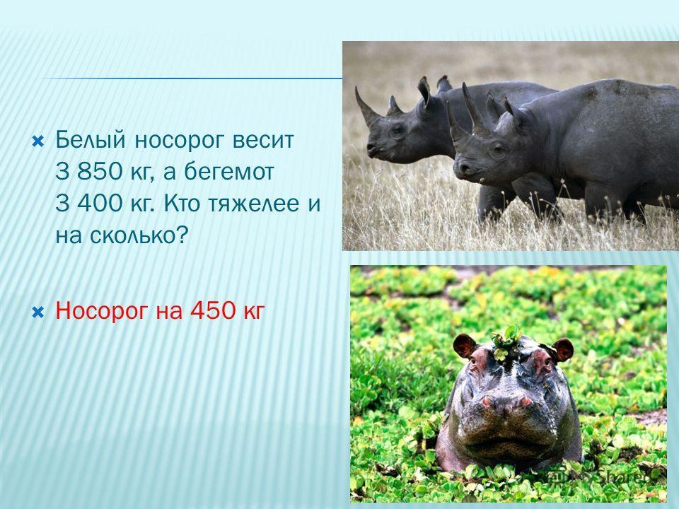 Белый носорог весит 3 850 кг, а бегемот 3 400 кг. Кто тяжелее и на сколько? Носорог на 450 кг