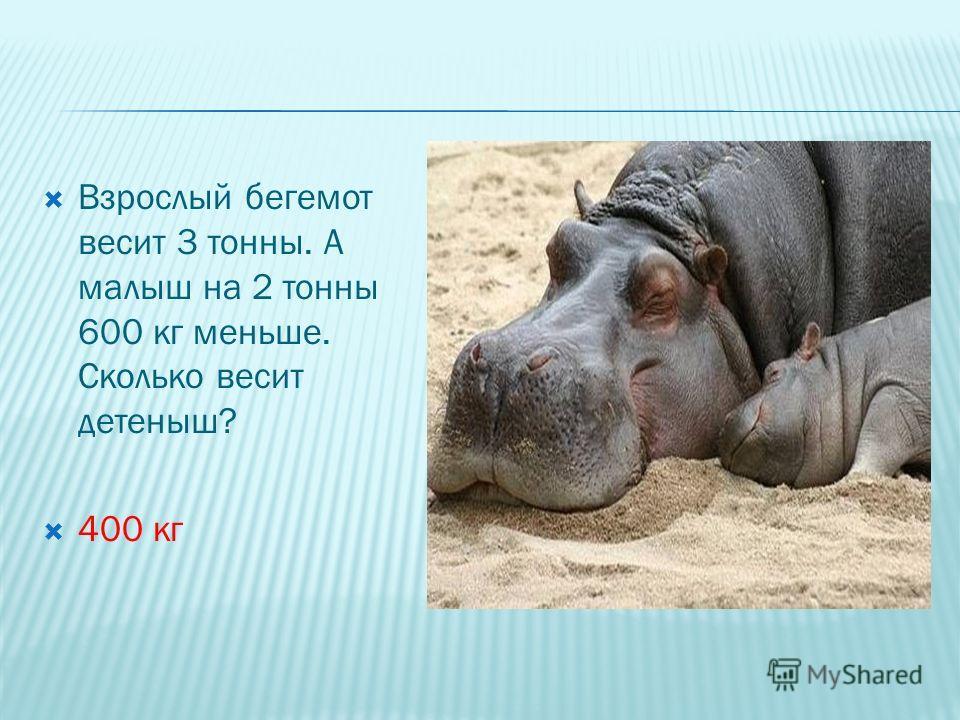 Взрослый бегемот весит 3 тонны. А малыш на 2 тонны 600 кг меньше. Сколько весит детеныш? 400 кг