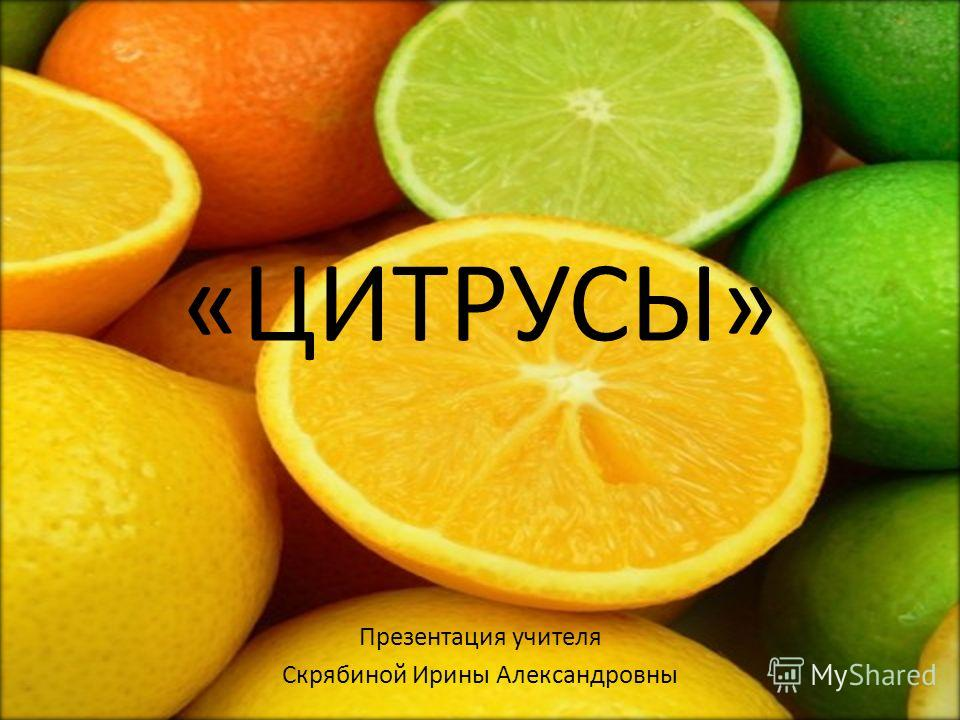 «ЦИТРУСЫ» Презентация учителя Скрябиной Ирины Александровны
