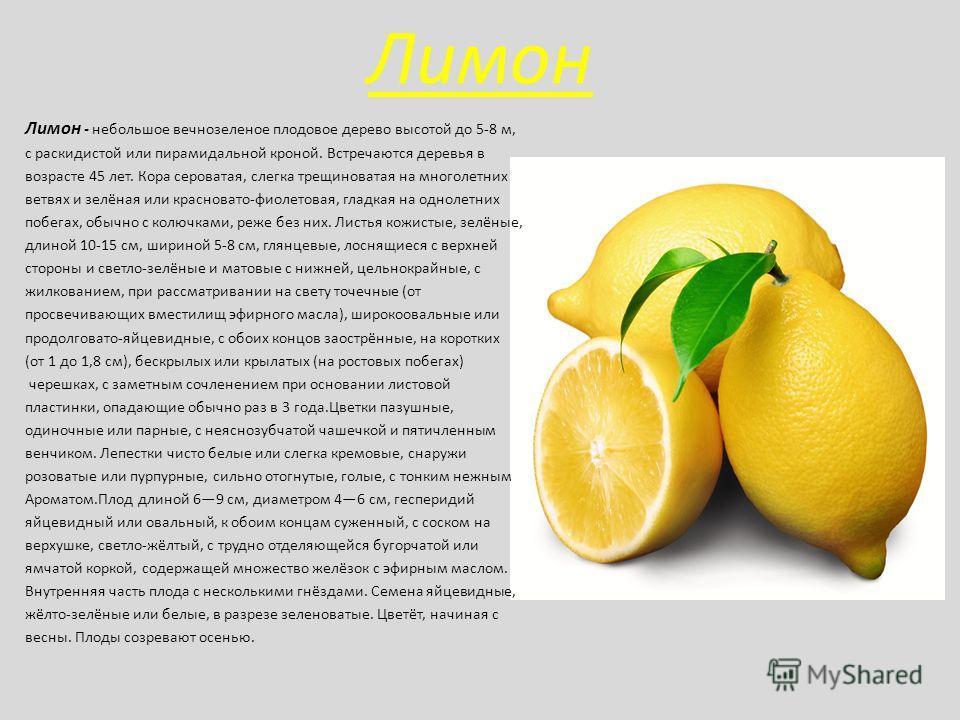 Лимон Лимон - небольшое вечнозеленое плодовое дерево высотой до 5-8 м, с раскидистой или пирамидальной кроной. Встречаются деревья в возрасте 45 лет. Кора сероватая, слегка трещиноватая на многолетних ветвях и зелёная или красновато-фиолетовая, гладк