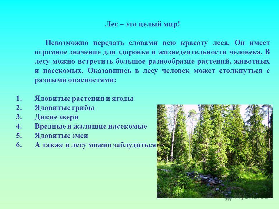 Лес – это целый мир! Невозможно передать словами всю красоту леса. Он имеет огромное значение для здоровья и жизнедеятельности человека. В лесу можно встретить большое разнообразие растений, животных и насекомых. Оказавшись в лесу человек может столк