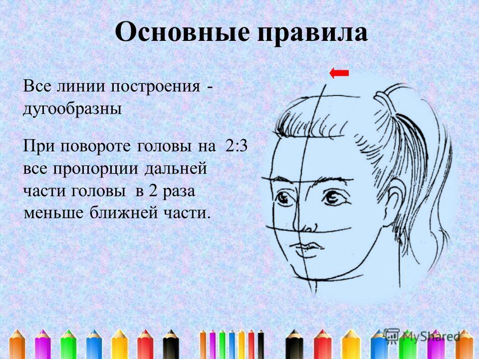Основные правила Все линии построения - дугообразны При повороте головы на 2:3 все пропорции дальней части головы в 2 раза меньше ближней части.