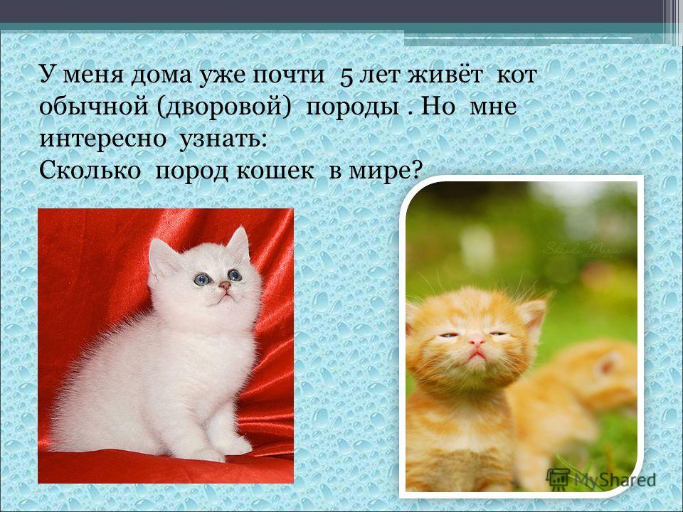 У меня дома уже почти 5 лет живёт кот обычной (дворовой) породы. Но мне интересно узнать: Сколько пород кошек в мире?