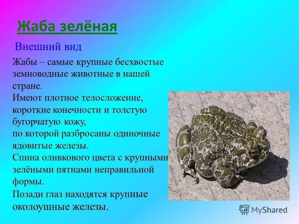 Научиться самостоятельно находить нужную информацию о редких животных, внести свой вклад в составление справочника «Редкие животные Тверской области».