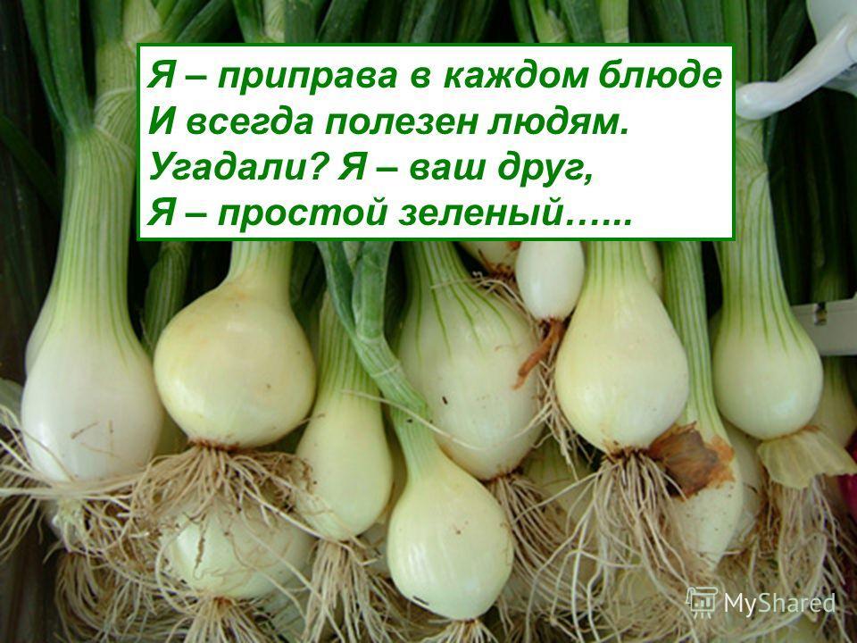 Белый корнеплод под землей растет Как корень добудешь – так плакать будешь