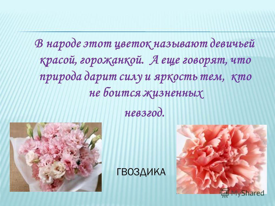 В народе этот цветок называют девичьей красой, горожанкой. А еще говорят, что природа дарит силу и яркость тем, кто не боится жизненных невзгод. ГВОЗДИКА