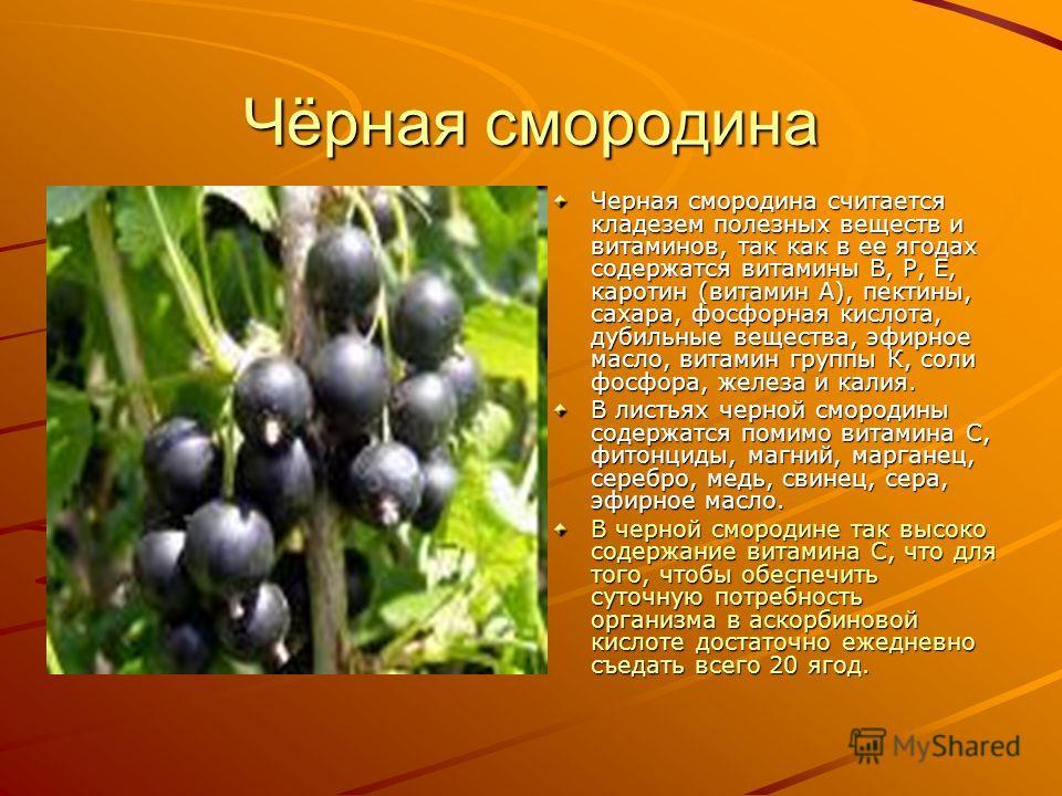 Чёрная смородина Черная смородина считается кладезем полезных веществ и витаминов, так как в ее ягодах содержатся витамины В, Р, Е, каротин (витамин А), пектины, сахара, фосфорная кислота, дубильные вещества, эфирное масло, витамин группы К, соли фос