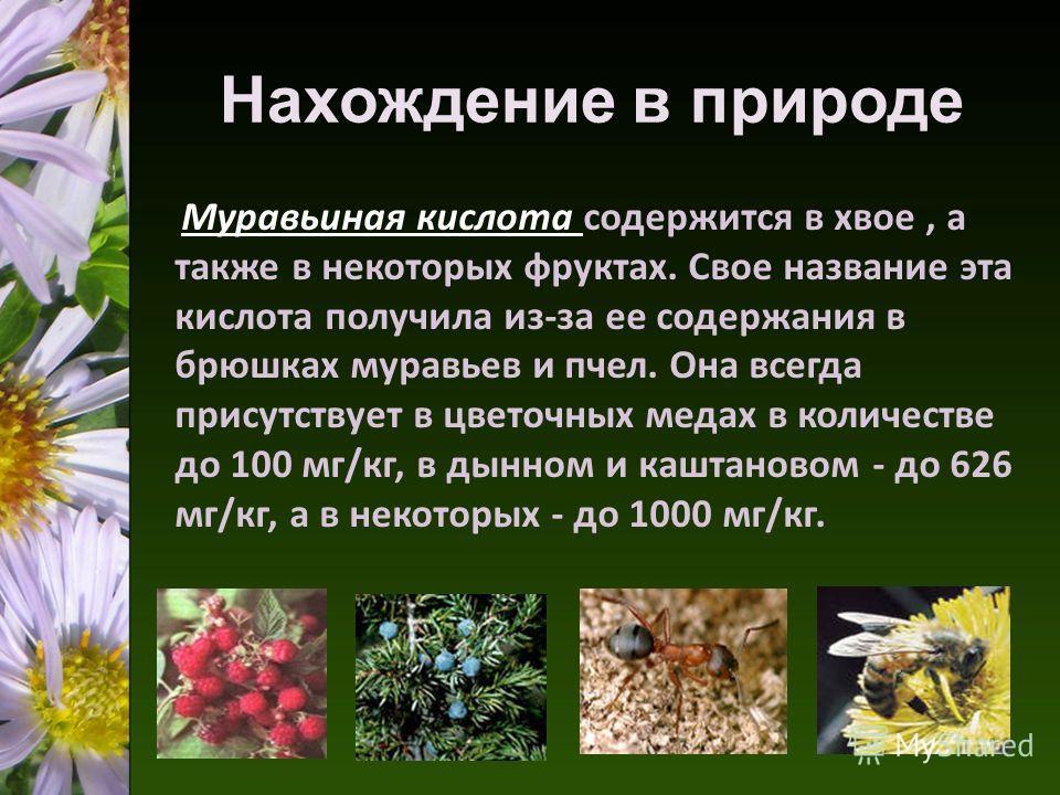 Нахождение в природе Муравьиная кислота содержится в хвое, а также в некоторых фруктах. Свое название эта кислота получила из-за ее содержания в брюшках муравьев и пчел. Она всегда присутствует в цветочных медах в количестве до 100 мг/кг, в дынном и