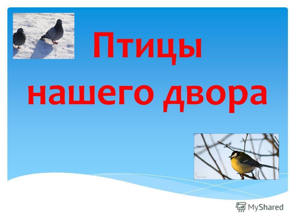 Птицы нашего двора