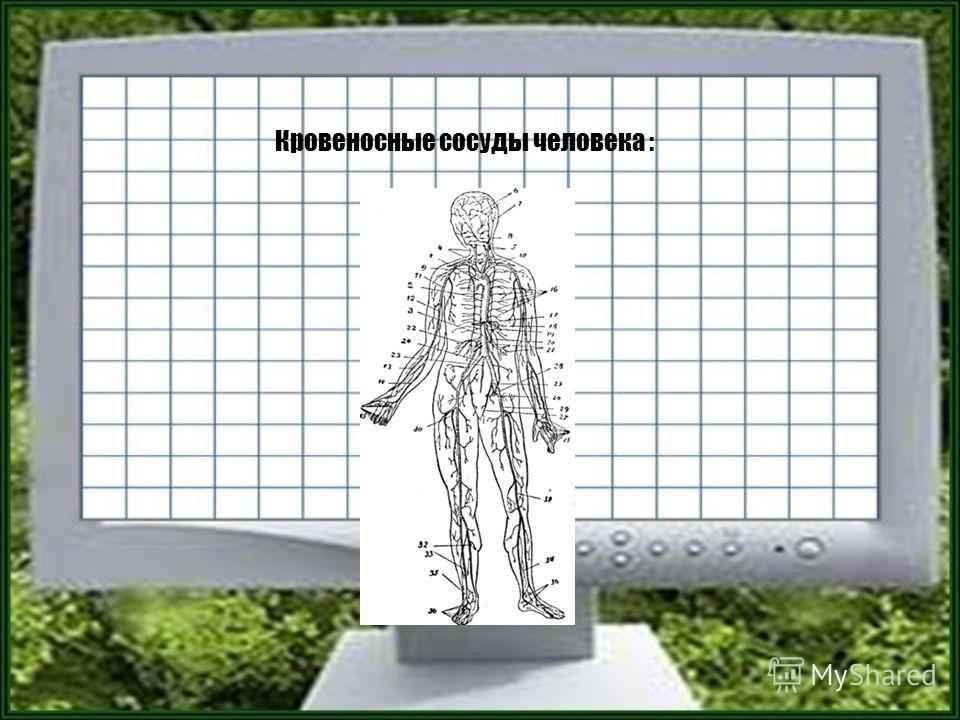 Кровеносные сосуды человека :