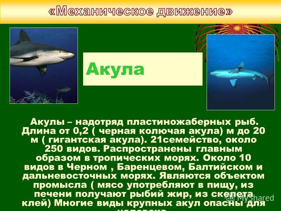 Акула Акулы – надотряд пластиножаберных рыб. Длина от 0,2 ( черная колючая акула) м до 20 м ( гигантская акула). 21семейство, около 250 видов. Распространены главным образом в тропических морях. Около 10 видов в Черном, Баренцевом, Балтийском и дальн