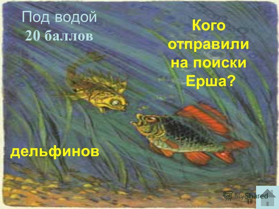 Под водой 20 баллов дельфинов Кого отправили на поиски Ерша?