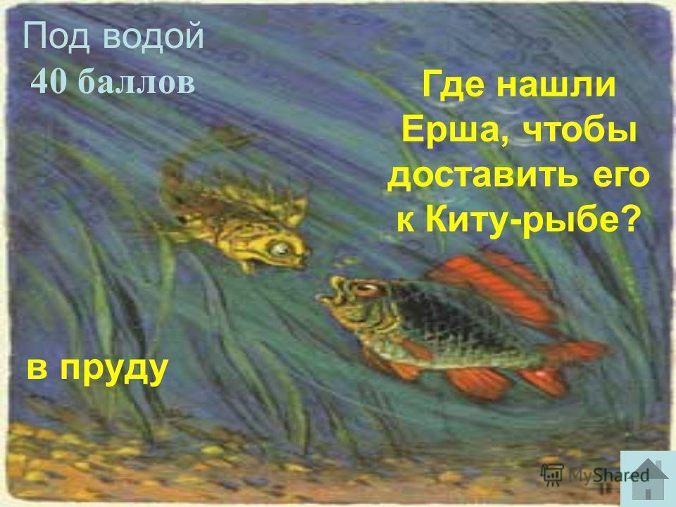 Под водой 40 баллов в пруду Где нашли Ерша, чтобы доставить его к Киту-рыбе?