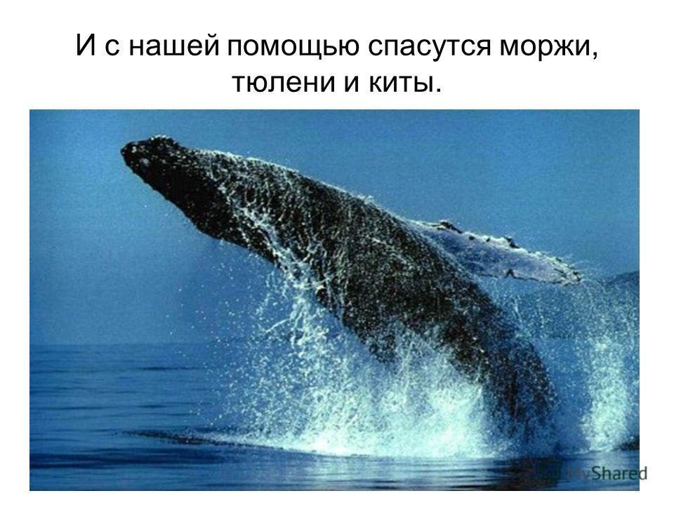 И с нашей помощью спасутся моржи, тюлени и киты.