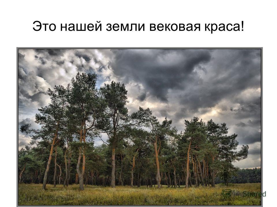 Это нашей земли вековая краса!