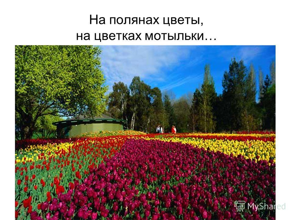 На полянах цветы, на цветках мотыльки…