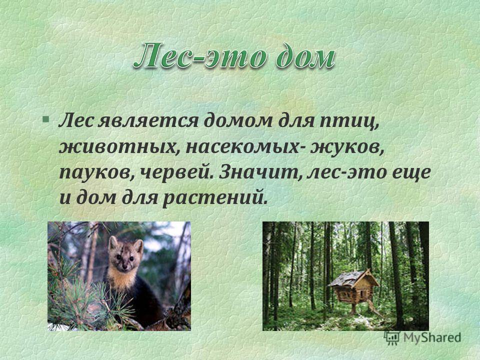 §Лес является домом для птиц, животных, насекомых- жуков, пауков, червей. Значит, лес-это еще и дом для растений.